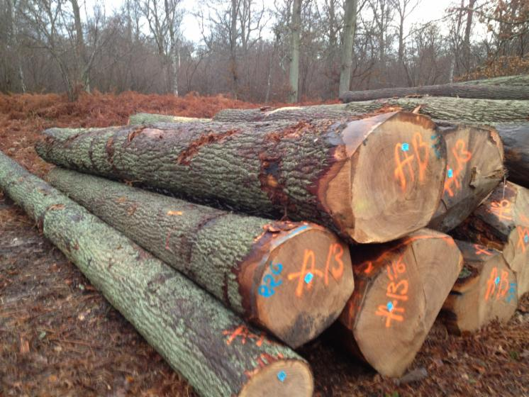 Oak Wood Logs ~ Offer oak logs and lumber boards timber for sale wood me