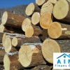 Saw Logs Lime (Linden) / roundwood
