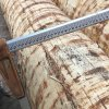 fresh spruce logs from northernitaly