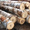 quality certified logs for sales